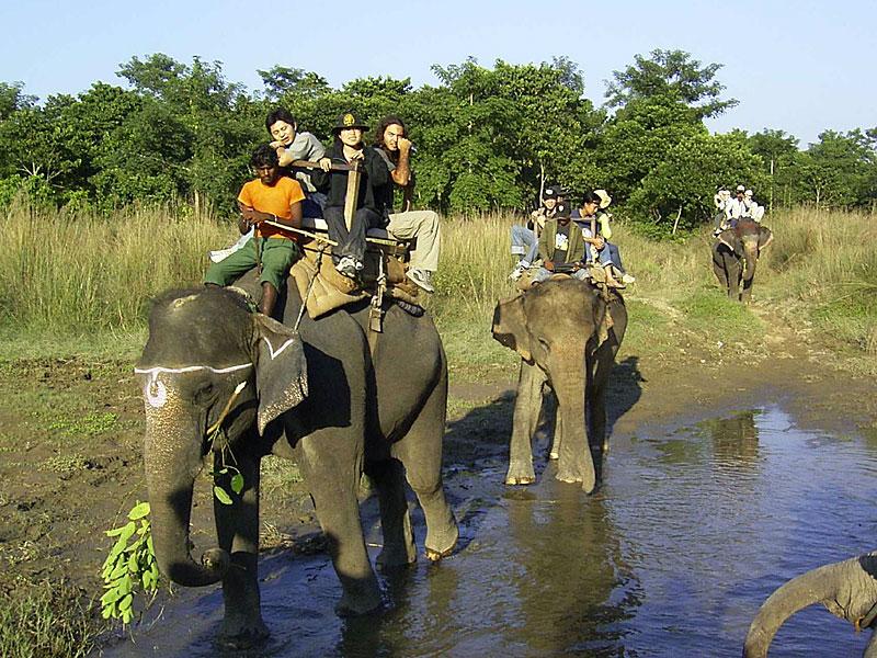 elefant_0268