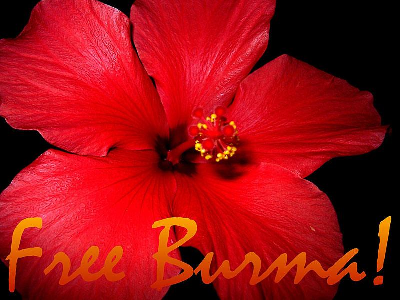 Burma_Blume_800