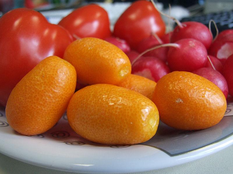 Kumquats59_800
