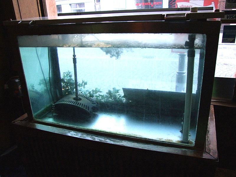 773_Aquarium
