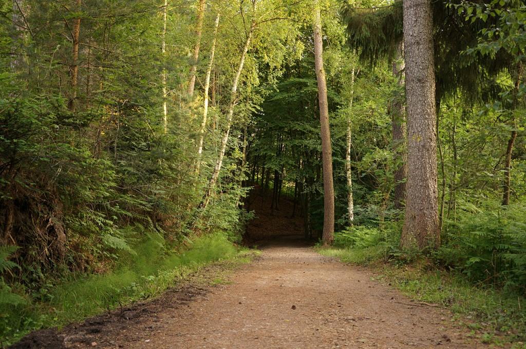 1698-Baumtunnel