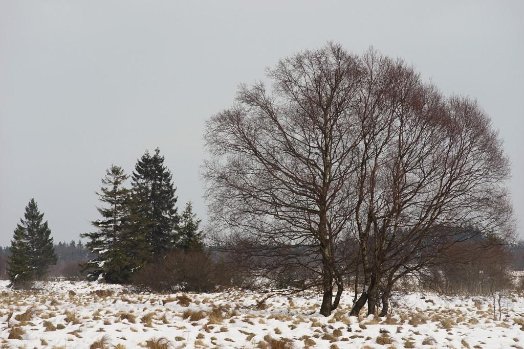 27-Winterbaum