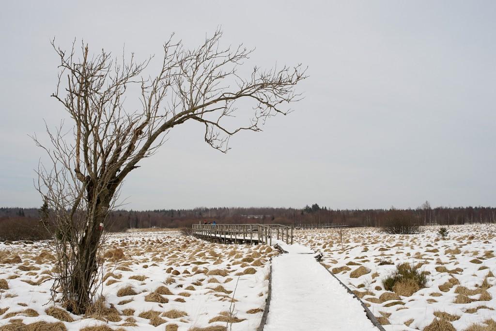 86-Krummbaum